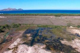 Abaqua detiene el vertido de aguas residuales de Can Picafort a s'Albufera