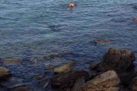 Delfín herido en la playa del Dolç