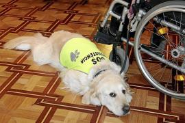 Más de 74.000 ciudadanos de Balears tienen reconocida alguna discapacidad