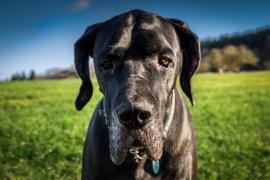 Un estudio indica que los perros entienden las palabras y la entonación de las personas