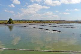 El Govern potencia la utilización del agua depurada para hacer frente a la sequía