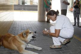 La perra Maya se reencuentra con su dueña Sandra