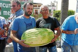 Un ejemplar de 19 kilos gana el concurso del 'meló més gros' de Vilafranca