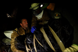 Retiran un segundo nido de avispa asiática en Sóller