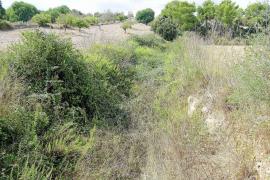 Ajuntament y vecinos de Felanitx se quejan por la acumulación de suciedad en los torrentes