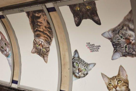El metro de Londres sustituye los paneles de publicidad por fotos de gatos en adopción