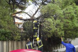 Las lluvias dejan 74 litros por metro cuadrado en Calvià y Llucmajor