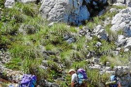 Más de 300.000 senderistas europeos llegarán de octubre a abril a Mallorca