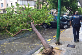 Cae un árbol frente a una escoleta por las intensas lluvias