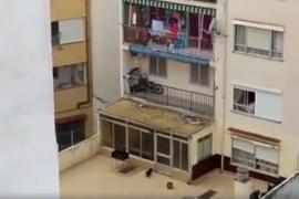 Denuncian la situación de un perro encerrado en una terraza de Palma