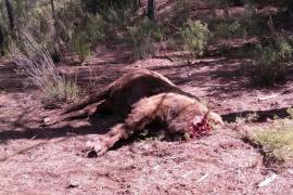 El misterio de los bisontes decapitados de Valencia
