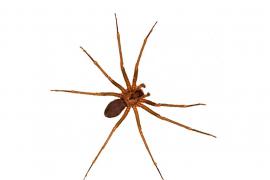 No hay ninguna alarma activa por picadura de arañas en Balears