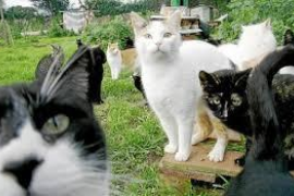 La ordenanza de bienestar animal de Calvià obliga a castrar a los gatos domésticos