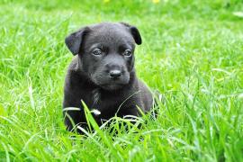 Cuatro historias de crueldad humana con animales y otras tantas para no perder la esperanza