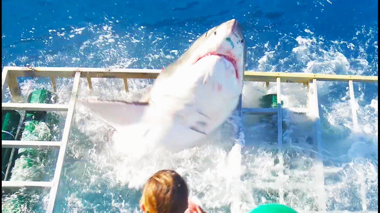 Un tiburón rompe y entra en la jaula donde había un buzo