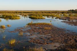 El GOB avisa de la «grave degradación» del parque natural de s'Albufera