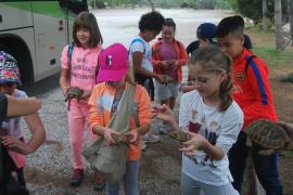 Alumnos del colegio público del Rafal Nou liberan 85 tortugas en el parque de Mondragó
