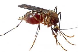 Las altas temperaturas propician la presencia de nuevos mosquitos