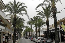 La reforma del paseo Colom de Can Picafort acabará con sus emblemáticas palmeras