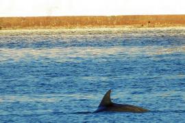 Un delfín, en el puerto