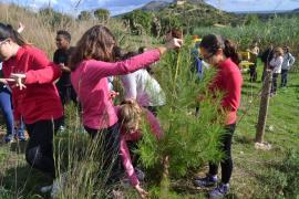 Los alumnos del IES Capdepera reforestan Son Barbassa