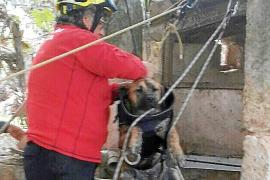 Los bomberos rescatan a una perra preñada que cayó en un pozo en Inca