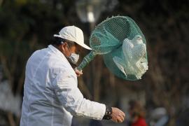 Detectan casos de gripe aviar en aves alrededor del lago de Constanza