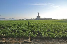 El plan de agricultura de Sa Pobla busca una estrategia de viabilidad del sector primario a diez años vista