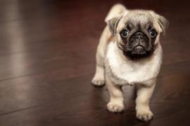 El Partido Animalista reclama tres años de prisión para una mujer que arrojó a un perro desde un séptimo piso