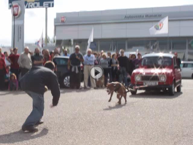 'Argus', un pitbull que arrastra un 4L de 1.400 kg cargado de niños