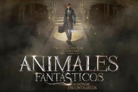 La película «Animales fantásticos y dónde encontrarlos» ha llegado al número uno en taquilla