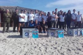 Tres tortugas marinas han sido liberadas tras recuperarse en Palma Aquarium