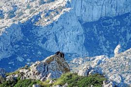 La Universidad de Alcalá avisa que la presión turística en la Serra amenaza a la fauna