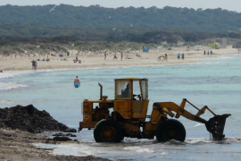 Un estudio pide prohibir la extracción de algas en el futuro Parc Natural des Trenc