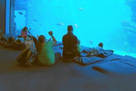 Palma Aquarium: diversión bajo el mar