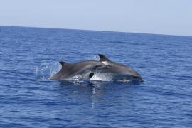 Los delfines atraviesan la red