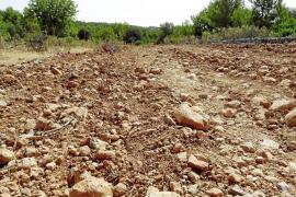 SANTA MARIA - LOS ECOLOGISTAS DENUNCIAN GRAVES DAÑOS EN EL CAMINO DEL CABAS.