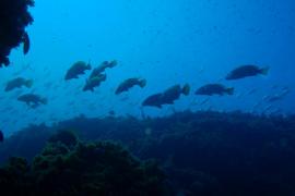 El Govern prohíbe la pesca submarina en la reserva marina de Llevant
