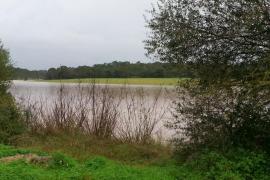 Las zonas de cultivo de Campos se han visto afectadas por el desbordamiento de torrentes