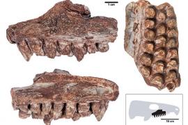 Hallado en la serra de Tramuntana un raro fósil de un reptil de hace 260 millones de años