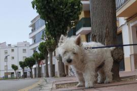 Inca modifica la nueva ordenanza sobre la tenencia de animales tras las alegaciones de PACMA