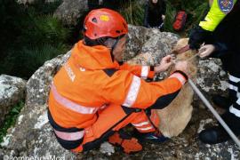 Los Bomberos de Mallorca rescatan a un perro atrapado en un grieta