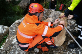Los bomberos rescatan a un perro que quedó atrapado entre las rocas en Pollença