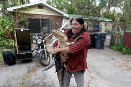 Florida permite a una mujer mantener en casa a su mascota, un cocodrilo de casi dos metros