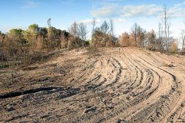 La tala de árboles quemados en la zona de sa Canova altera el suelo dunar