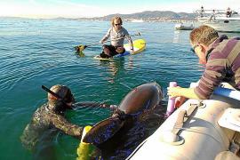 «El delfín lo rescatamos nosotros, que no se apunten méritos»