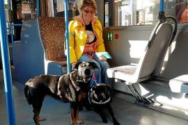 Más de 2.500 perros han viajado en los autobuses de la EMT durante 2016