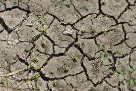 Doce municipios de Mallorca mantienen la prealerta por sequía