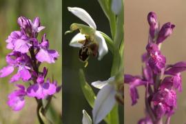 La Fàbrica Ramis acoge el taller familiar 'El curioso mundo de las orquídea en Baleares'