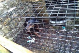Animalistas denuncian el uso indiscriminado de trampas para animales facilitadas por el Govern